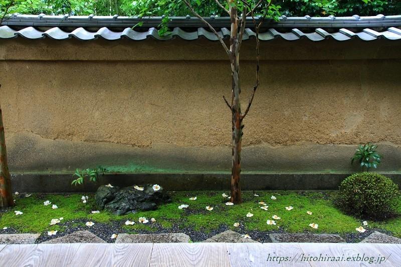 京都 妙心寺 東林院 沙羅の花を愛でる会_f0374092_22051360.jpg