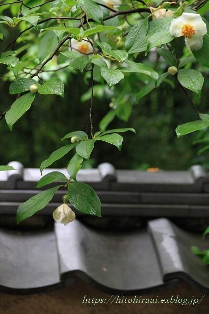 京都 妙心寺 東林院 沙羅の花を愛でる会_f0374092_22053319.jpg