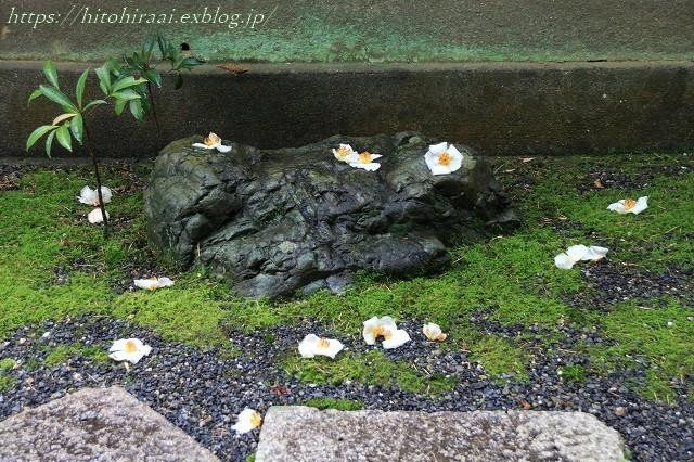 京都 妙心寺 東林院 沙羅の花を愛でる会_f0374092_22055666.jpg