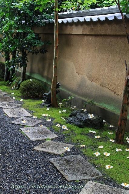 京都 妙心寺 東林院 沙羅の花を愛でる会_f0374092_22061620.jpg
