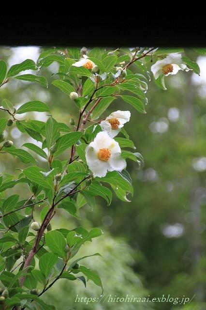 京都 妙心寺 東林院 沙羅の花を愛でる会_f0374092_22063947.jpg