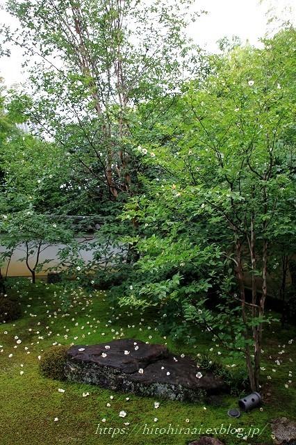 京都 妙心寺 東林院 沙羅の花を愛でる会_f0374092_22082334.jpg