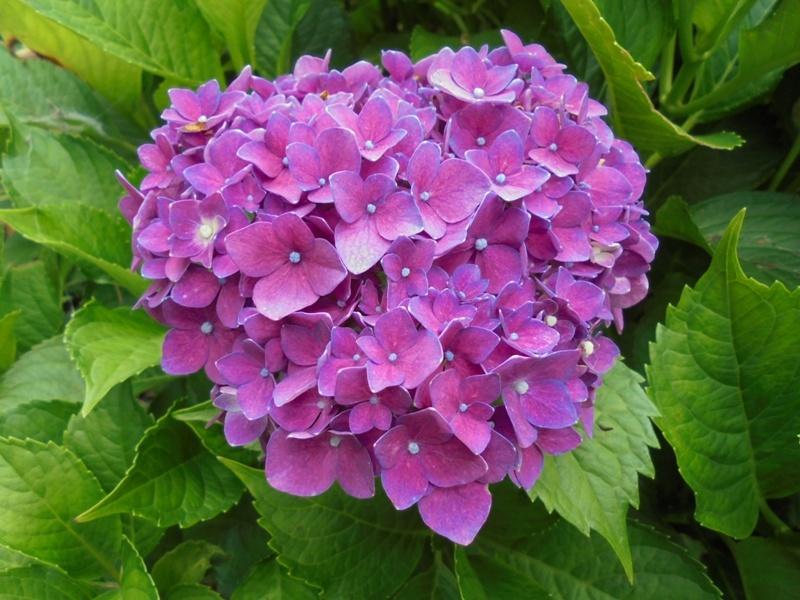 ☂ 雨に咲く ☂_a0208899_11403093.jpg