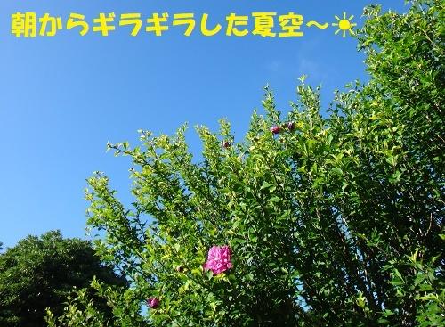 f0121712_14040035.jpg