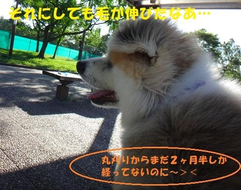 f0121712_15542969.jpg