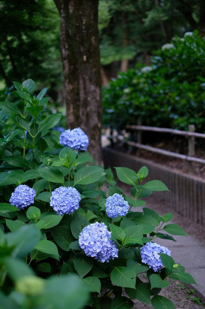 山田池公園_f0021869_20241508.jpg