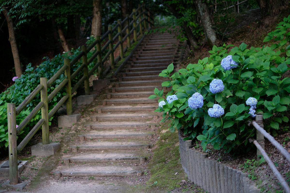 山田池公園_f0021869_20241531.jpg
