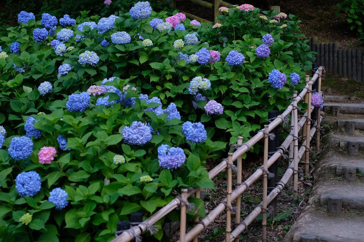 山田池公園_f0021869_20254173.jpg