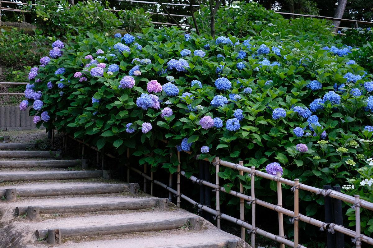 山田池公園_f0021869_20254210.jpg
