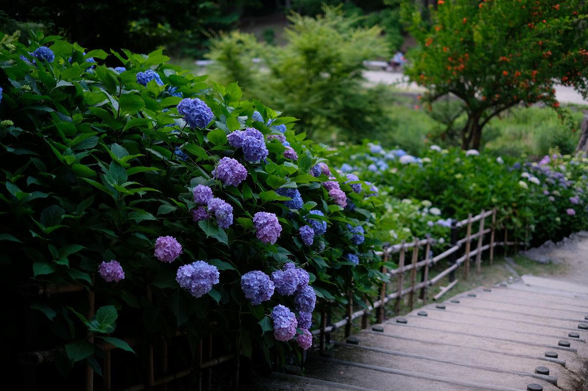 山田池公園_f0021869_20254221.jpg