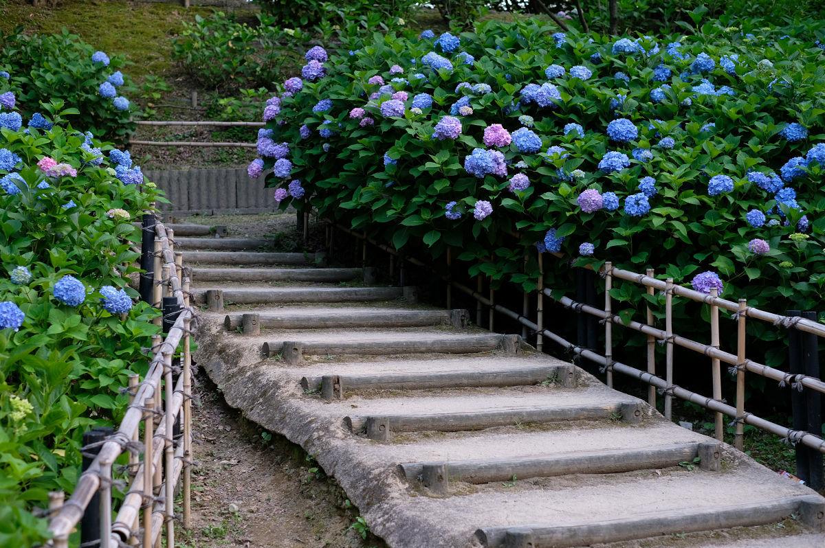 山田池公園_f0021869_20254350.jpg