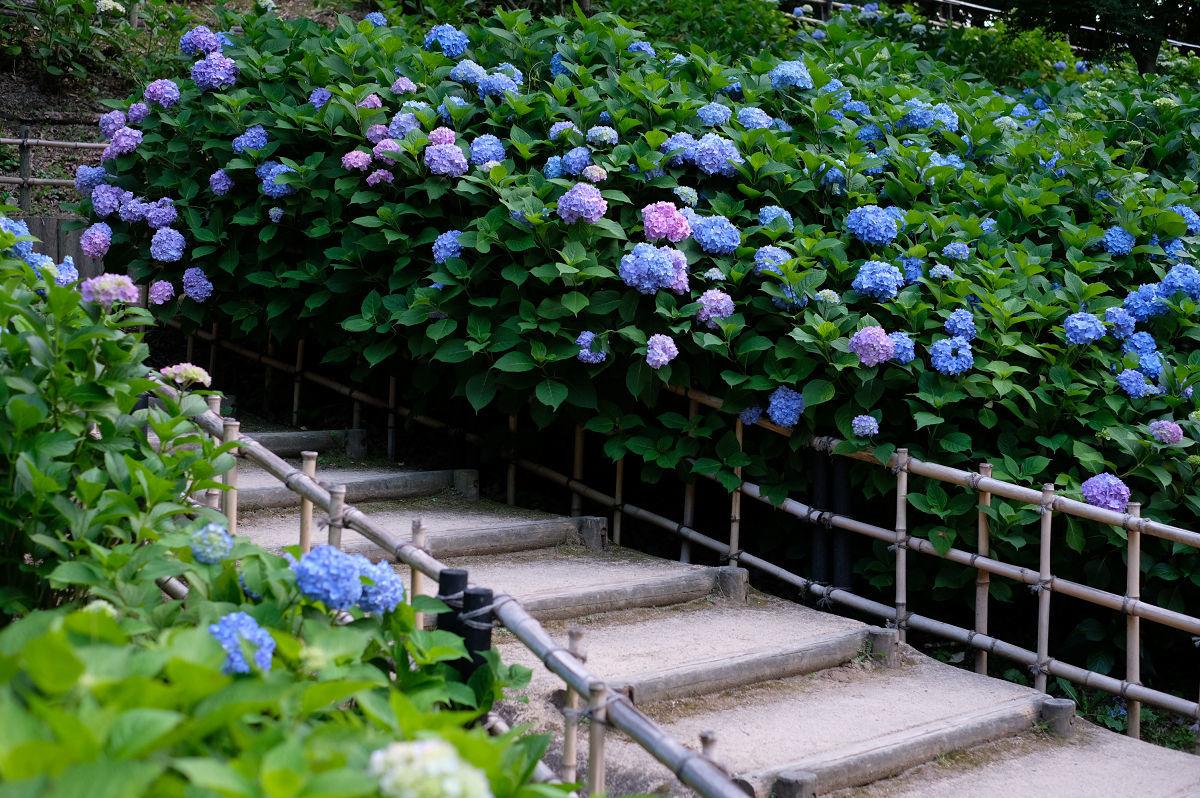 山田池公園_f0021869_20262349.jpg
