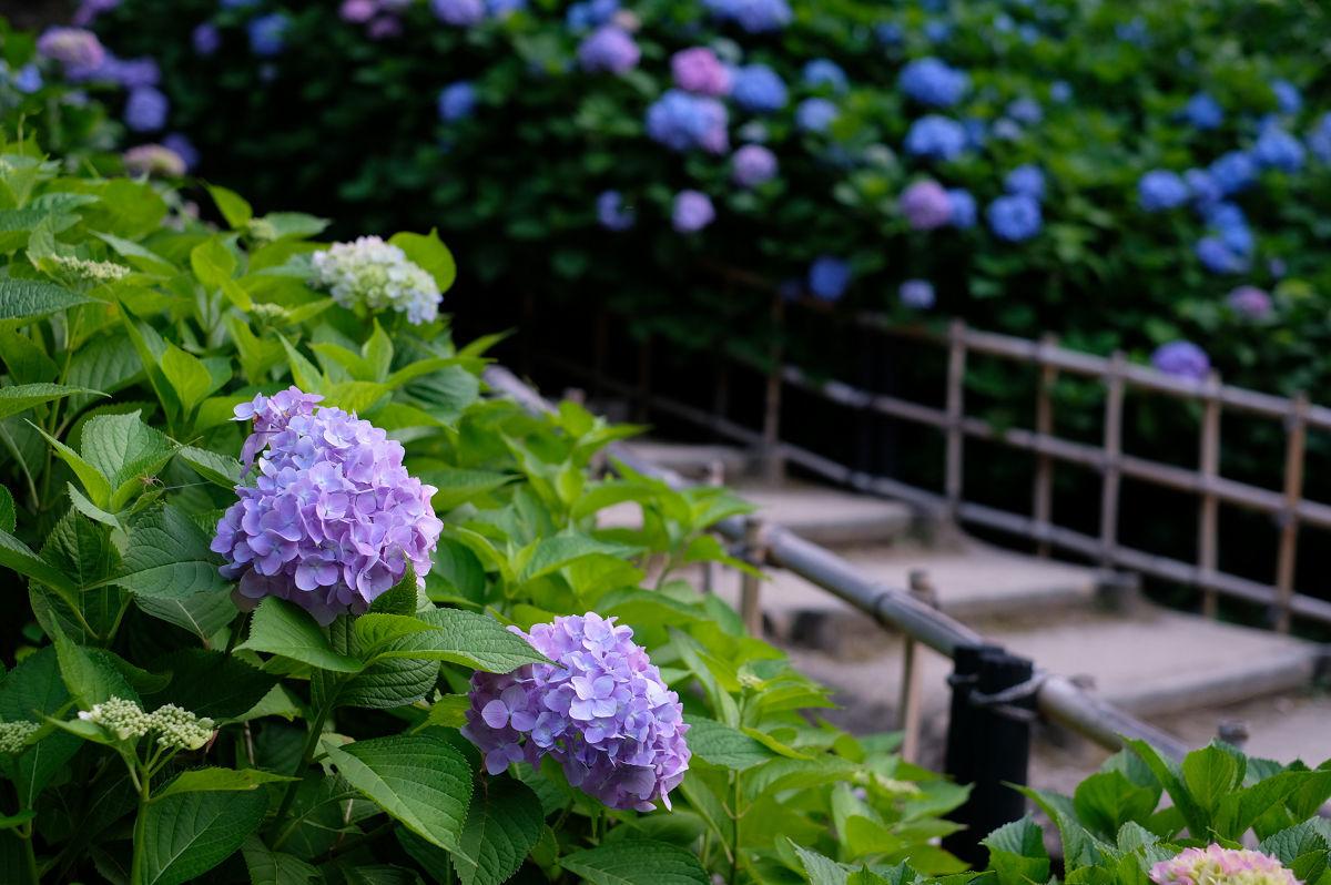 山田池公園_f0021869_20262494.jpg