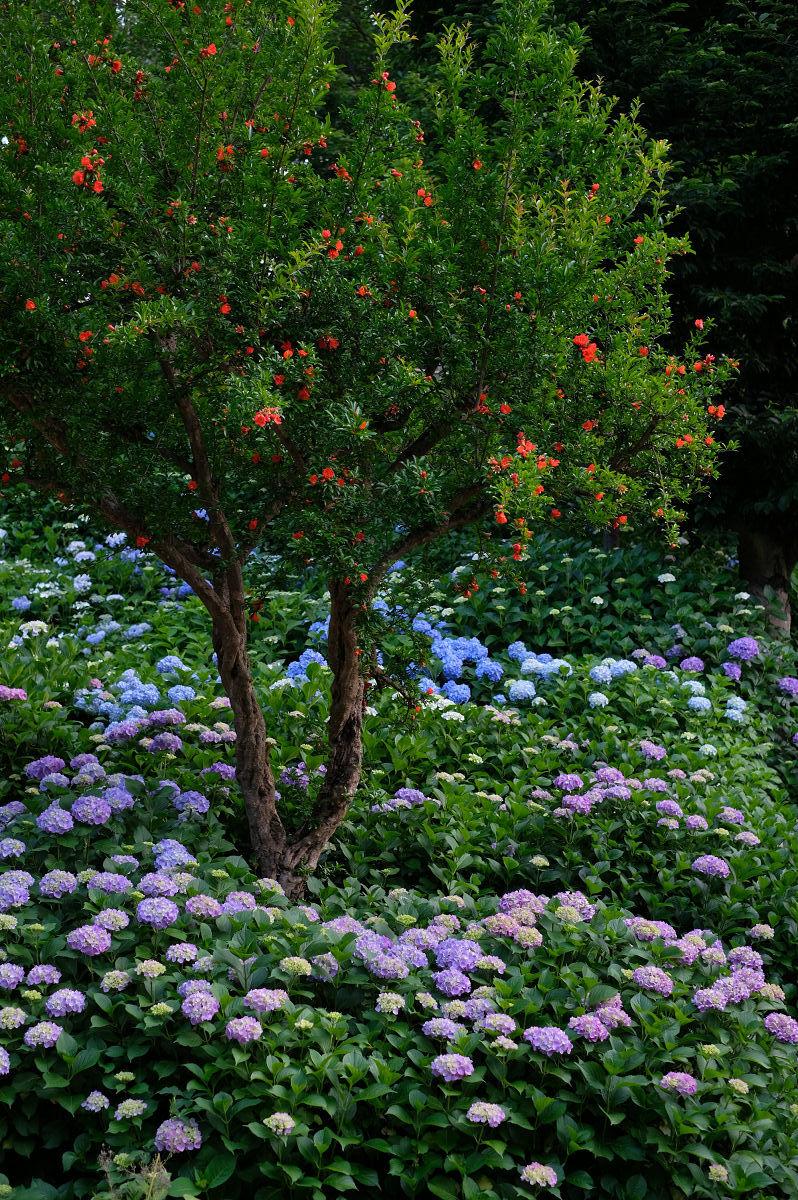 山田池公園_f0021869_20272803.jpg