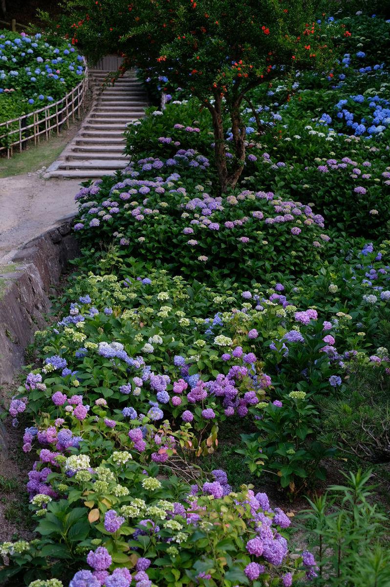 山田池公園_f0021869_20272834.jpg