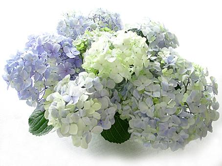 梅雨明け_a0368673_23530579.jpg