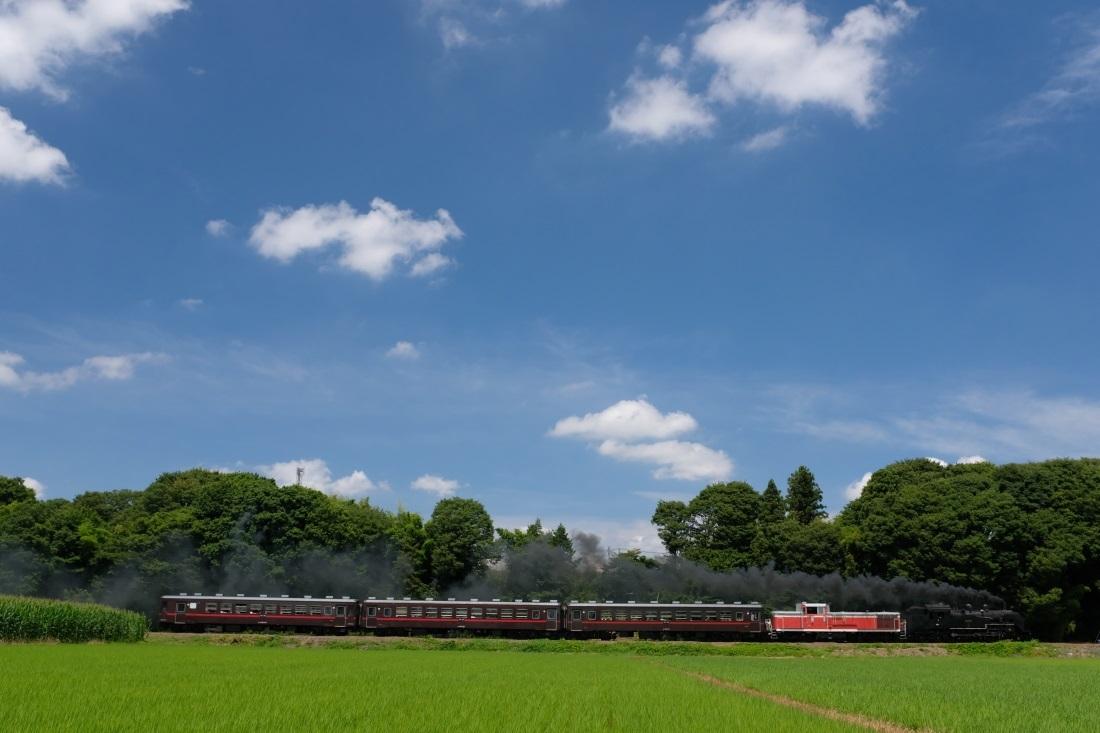 SL&DL重連運転 真岡鉄道 2018・06・30_e0143883_16573095.jpg