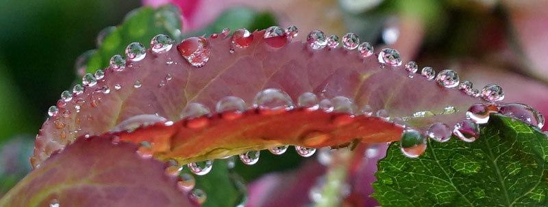 水滴・・2_d0162994_05462785.jpg