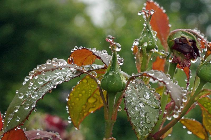 水滴・・2_d0162994_05465055.jpg