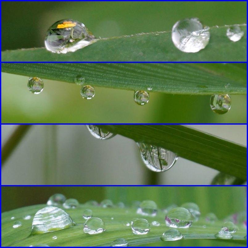 水滴・・2_d0162994_05474969.jpg