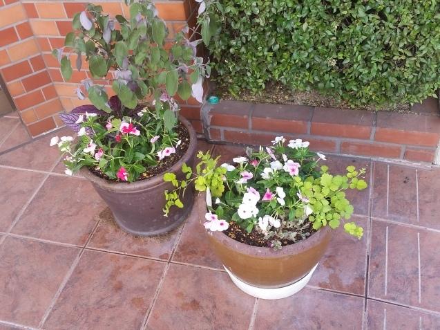 お花の植え替え♪_f0237698_19355545.jpg