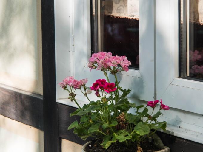 ひさびさの青空、遅れていた初夏の花が開花し始めました。_f0276498_23415306.jpg
