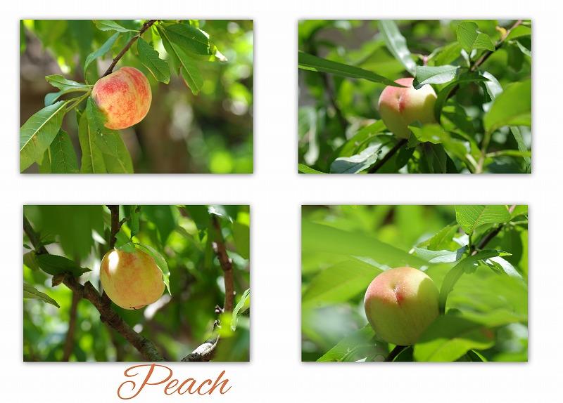 桃の木_d0147812_15221362.jpg