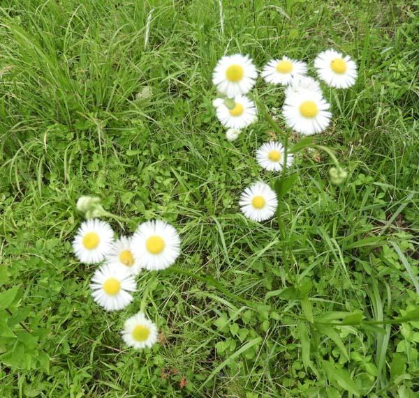 菜園の夏花_e0048413_21341477.jpg