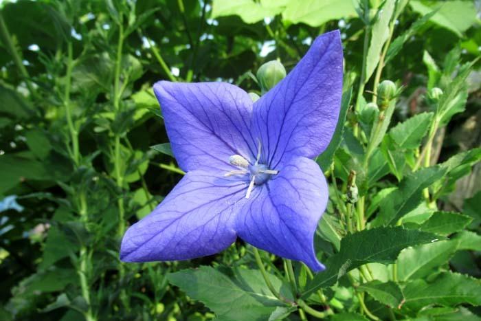 菜園の夏花_e0048413_21342845.jpg