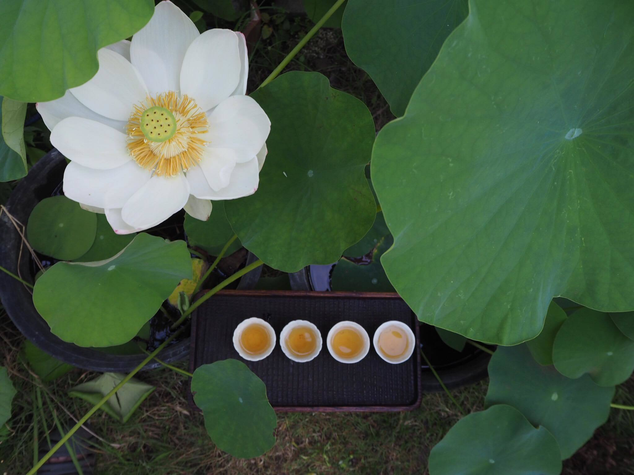 囍茶 夏茶会 「蓮葉の宴」/追加席を作りました_d0210537_11192287.jpg