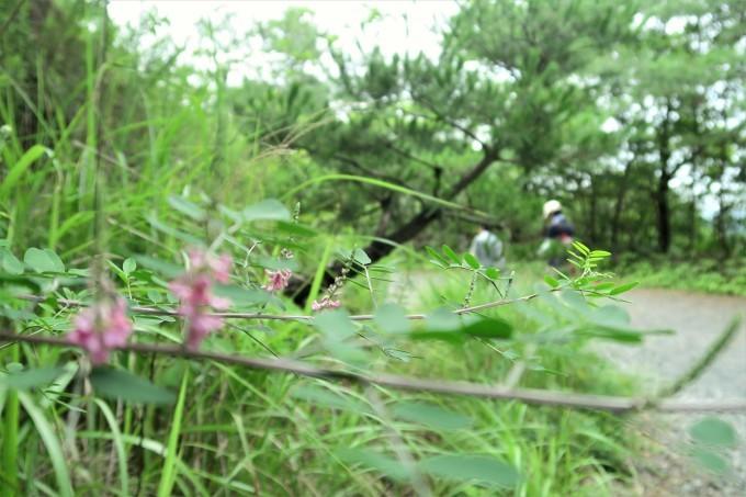 萩の花道_e0348754_12533984.jpg