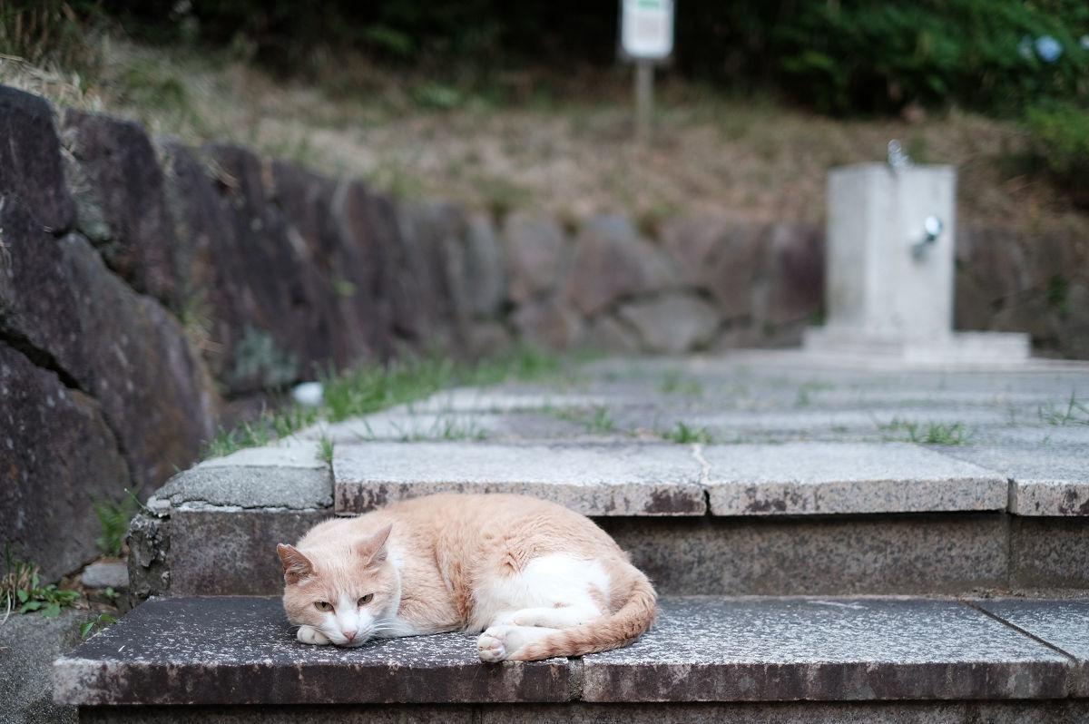 山田池公園_f0021869_22425083.jpg