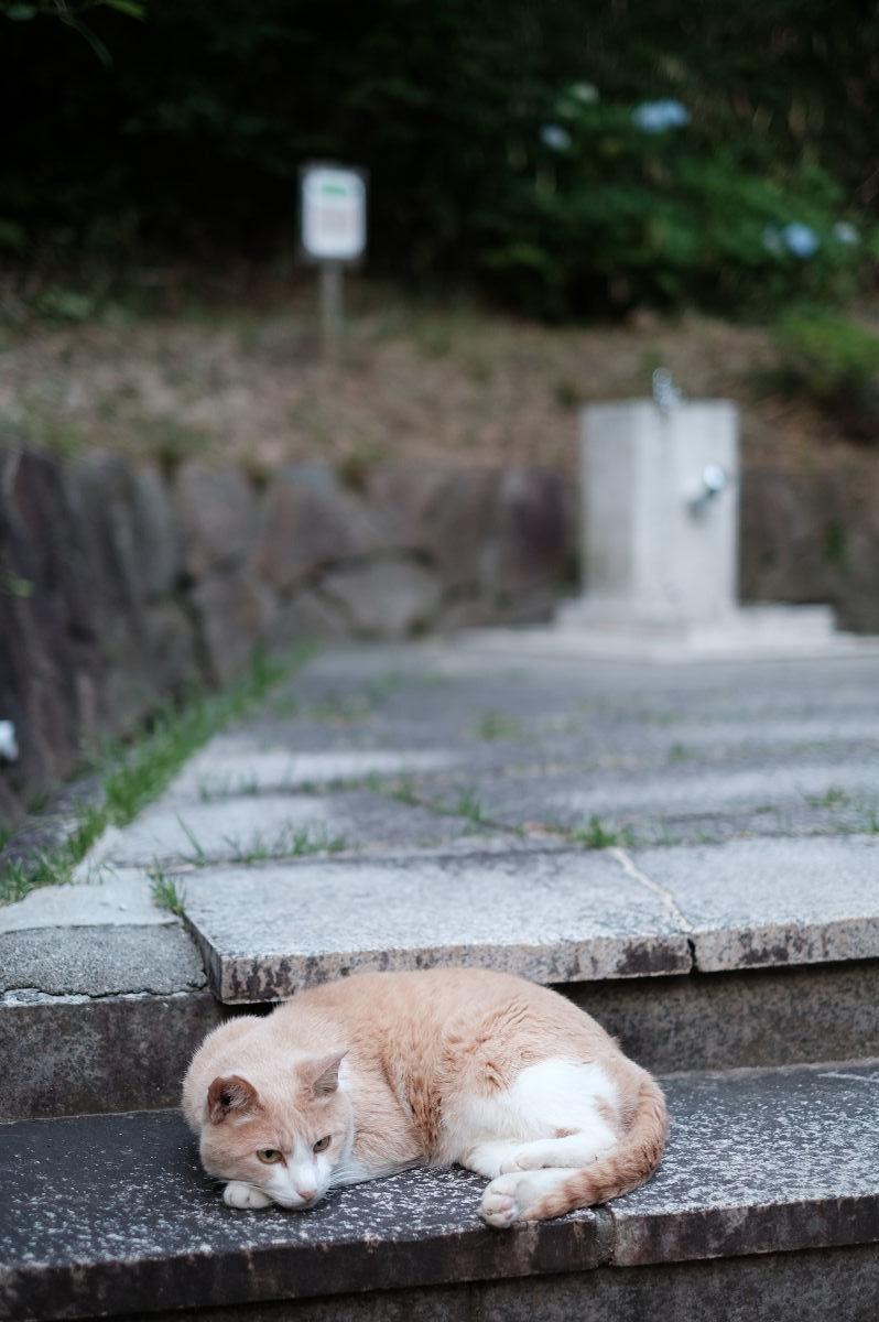 山田池公園_f0021869_22451815.jpg
