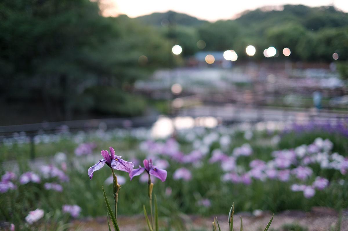 山田池公園_f0021869_22462835.jpg