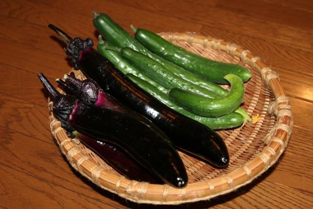 キュウリ・三度豆・モロッコ・茄子の料理が続きます。_f0229190_11043051.jpg