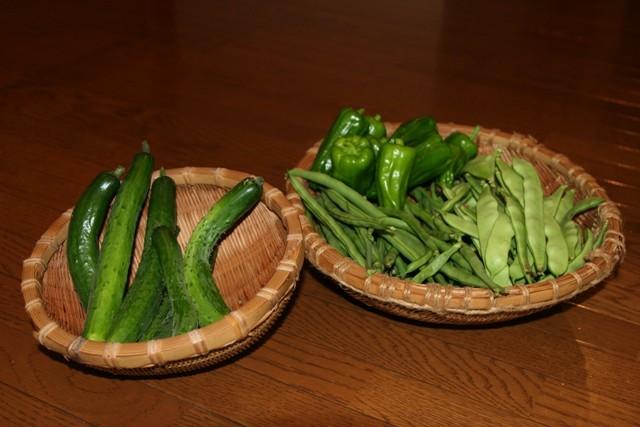 キュウリ・三度豆・モロッコ・茄子の料理が続きます。_f0229190_11081344.jpg
