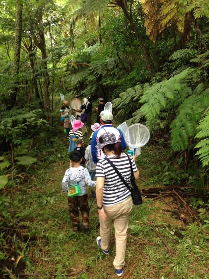 初夏の八重岳の自然観察会 ありがとうございました!_a0247891_22180893.jpg