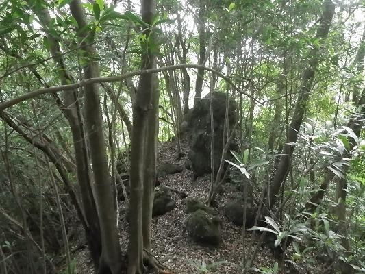 18-7:岩屋山系(タシロラン)   _f0187402_18453030.jpg