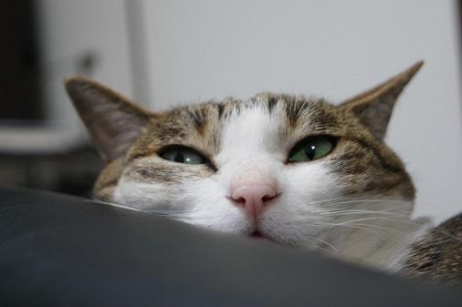 3+1匹のネコのポーチ_a0122205_14080232.jpg