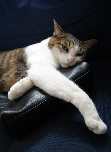 3+1匹のネコのポーチ_a0122205_14081190.jpg