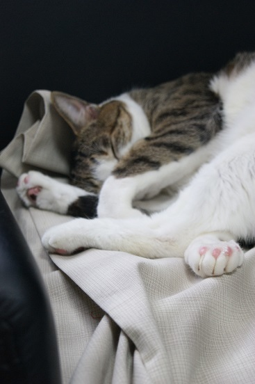 3+1匹のネコのポーチ_a0122205_14081835.jpg