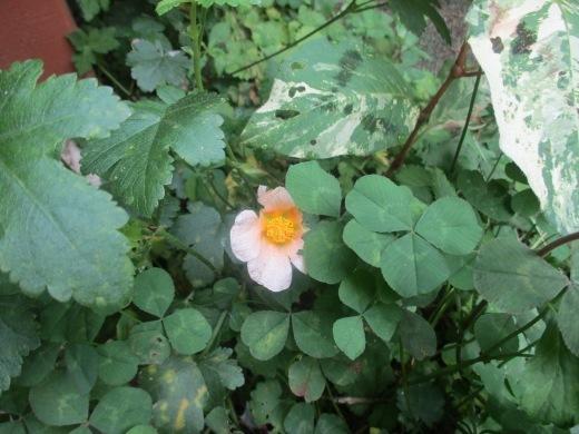 花はいつかは咲く       7月 2日(月)_d0127634_06224901.jpg