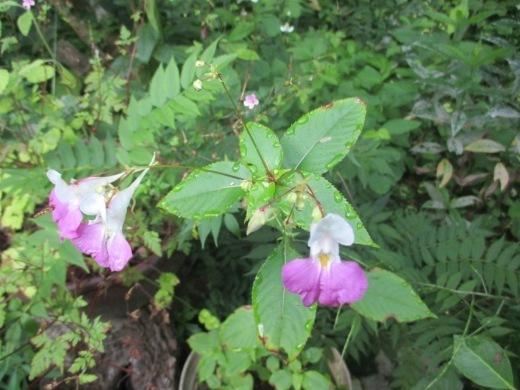 花はいつかは咲く       7月 2日(月)_d0127634_06245477.jpg