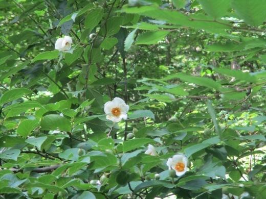 花はいつかは咲く       7月 2日(月)_d0127634_06354722.jpg
