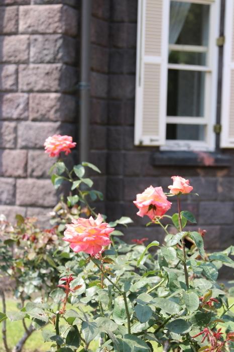 旧古河庭園のバラ♪ 4_d0152261_14263028.jpg