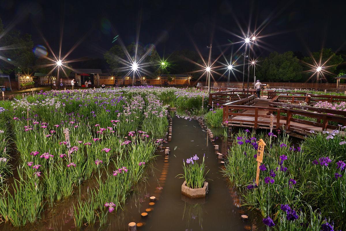 山田池公園_f0021869_21324990.jpg