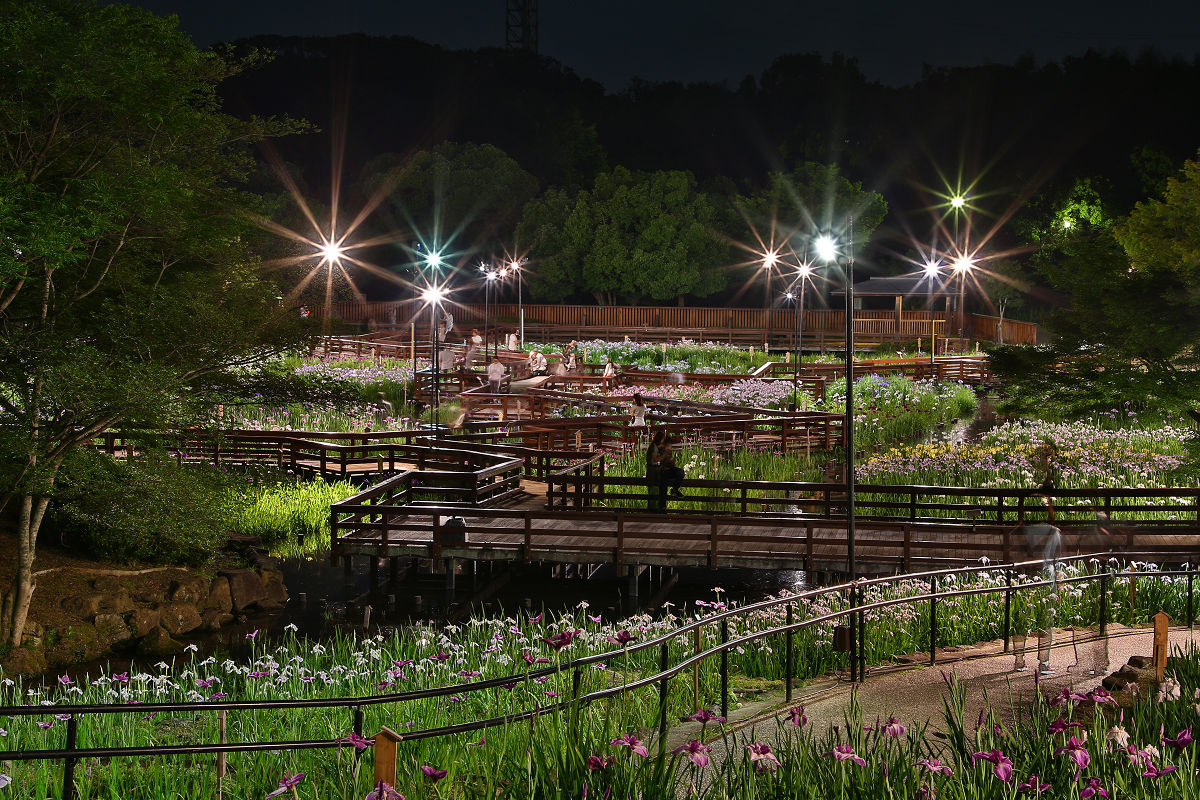山田池公園_f0021869_21325119.jpg