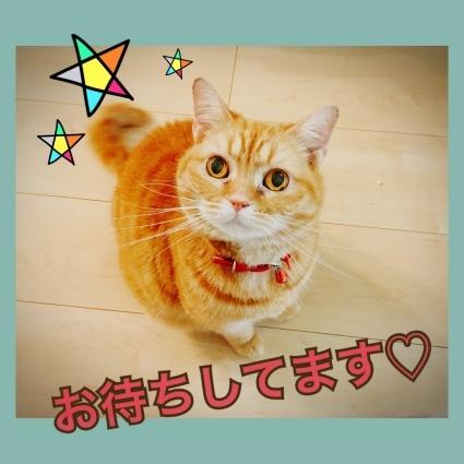 7月お休みのお知らせ☆_d0178587_00595042.jpeg