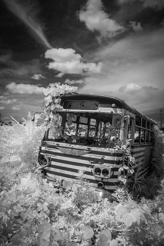 A Wrecked Bus In White Field_d0353489_16045526.jpg
