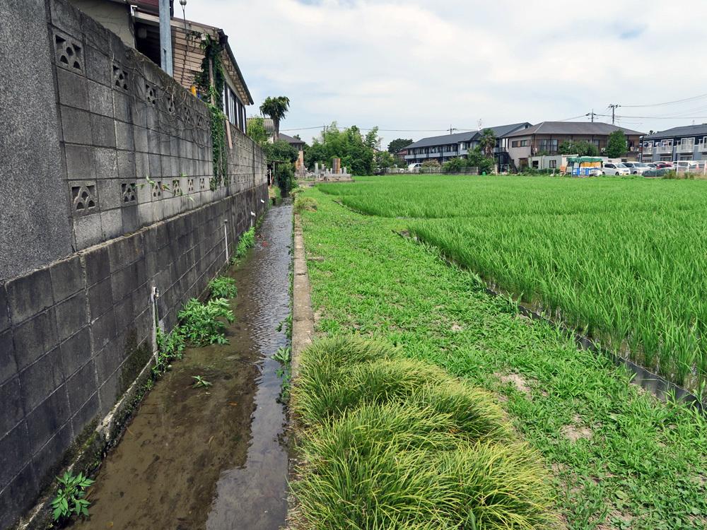 生きている暗渠を探せ!四谷用水流末の田んぼへの給水ルートを探る_c0163001_22522579.jpg